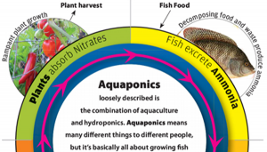Aquaponic-thumb