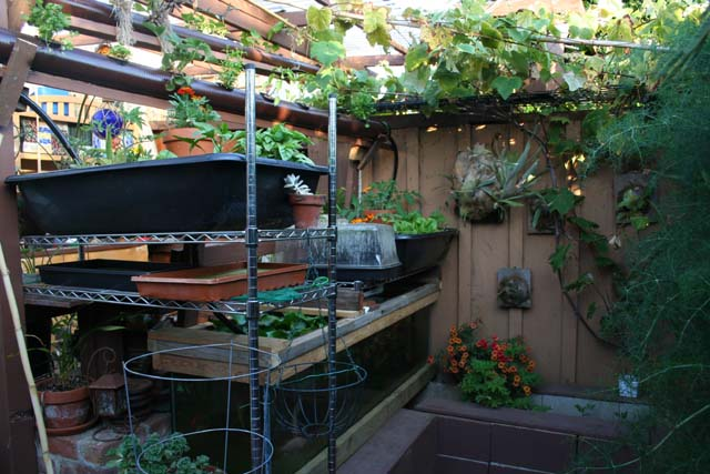 Small space home scale ebb flow aquaponic system urban fish farmer - Small space farming image ...