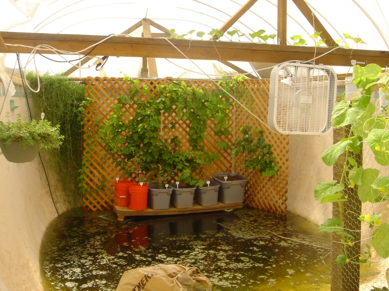 Garden pool aquaponics urban fish farmer for Self sustaining pool