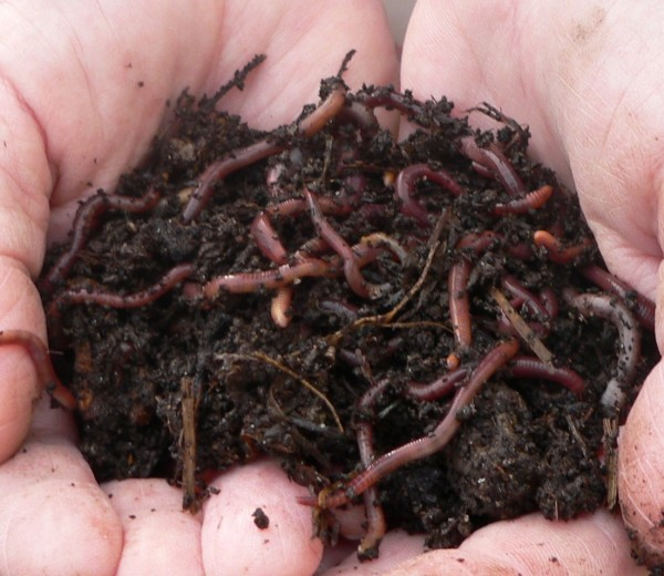 Vermicomposting
